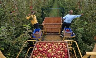 Saisonniers agricoles : à vos offres, démarrage imminent !